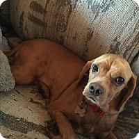 Adopt A Pet :: Enrique - Long Beach, CA