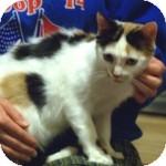 Calico Cat for adoption in Colorado Springs, Colorado - Mary Kate