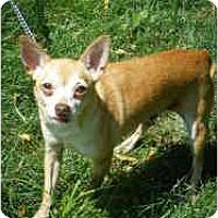 Adopt A Pet :: Brownie - Milwaukee, WI