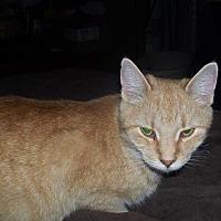 Adopt A Pet :: Autumn - Columbia City, IN