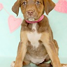 Adopt A Pet :: Cairnes