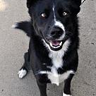 Adopt A Pet :: Penelope M