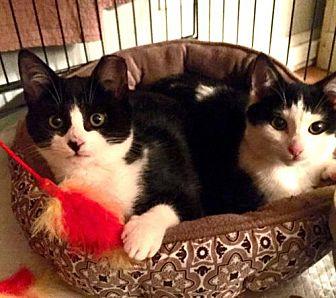 Adopt A Pet :: AF- PJ and Smudge  - Devon, PA