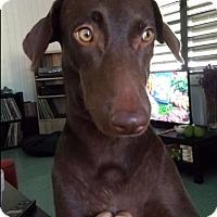 Adopt A Pet :: Rosa - New York, NY