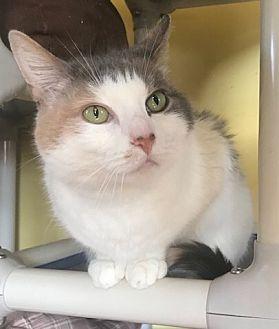 Adopt A Pet :: Luna B  - Devon, PA