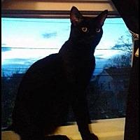 Adopt A Pet :: Felix - Long Beach, NY