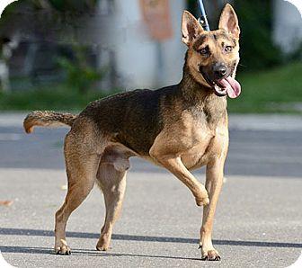 West Coast Dog Rescue Surrey Bc