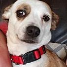 Adopt A Pet :: Lana - RBF