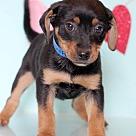 Adopt A Pet :: Bosworth