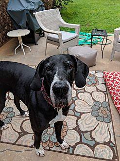 Adopt A Pet :: Catia  - Phoenixville, PA
