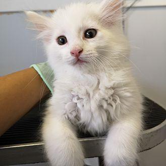 Adopt A Pet :: Truffle  - Moose Jaw, SK