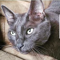 Kittens for Sale in Seattle Washington - Adoptapet com