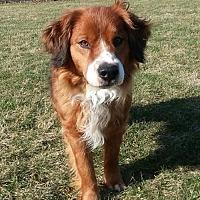 Adopt A Pet :: OH/Pepper Ann - Reston, VA