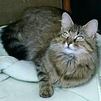 Adopt A Pet :: Momma - Saint Clair, MO
