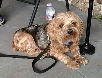 Adopt A Pet :: STEVIE  - Oakland, CA