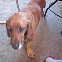 Adopt A Pet :: Lena - Albuquerque, NM