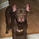 Adopt A Pet :: Dulce