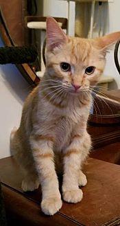 Adopt A Pet :: HAPPY  - Northwood, NH