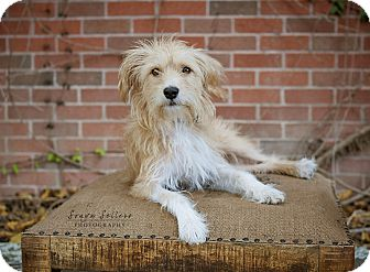 Houston Tx Jack Russell Terrier Meet Frankie Happy Doggy A Pet