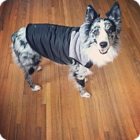 Adopt A Pet :: Jax - Minneapolis, MN