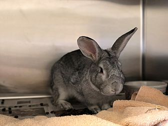 Adopt A Pet :: Leo  - Moose Jaw, SK