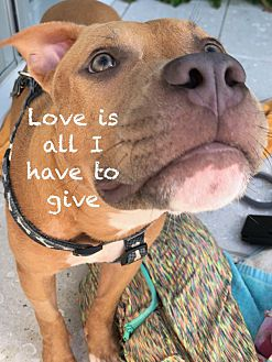 Adopt A Pet :: A miracle for Marco..  - Ft Myers Beach, FL
