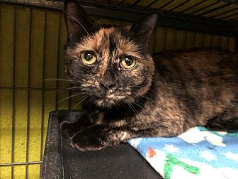 Adopt A Pet :: Shadow  - Moose Jaw, SK