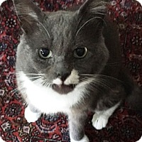 Adopt A Pet :: Smith  *Courtesy posting* - Worcester, MA