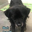 Adopt A Pet :: Mark