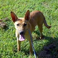 Adopt A Pet :: Bella Donna - Allentown, NJ