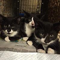 free cat clinic