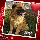Adopt A Pet :: Mitzi