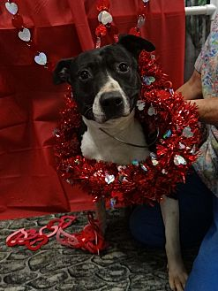 Adopt A Pet :: Miller  - Henderson, NC