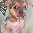 Adopt A Pet :: Puppy #2 - HAS APPLICATION