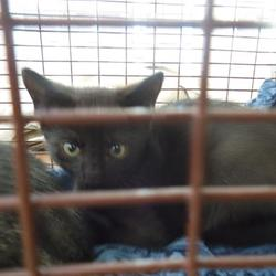 san jose city animal shelter
