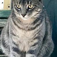 Adopt A Pet :: Evin Rude - Royal Palm Beach, FL
