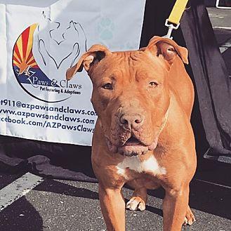 Adopt A Pet :: Isadora  - Phoenix, AZ