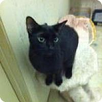 Adopt A Pet :: Teddy - St. James City, FL