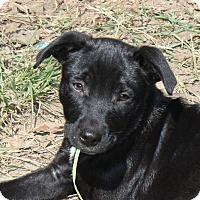 Adopt A Pet :: Brett - Marion, AR