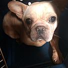 Adopt A Pet :: Roo