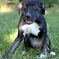 Adopt A Pet :: Annabelle - Waldorf, MD