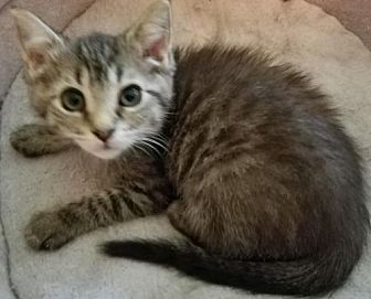 Adopt A Pet :: COURTESY LIST DA-Trixie  - Devon, PA