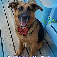 Adopt A Pet :: Leonard - Warkworth, ON