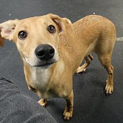 Adopted Pets At Draw Dog Rescue Around Washington In Tacoma Washington