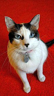 Adopt A Pet :: Willow  - Edmond, OK