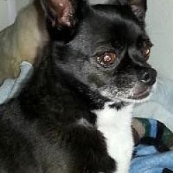 Puppies for Sale in Iowa - Adoptapet com