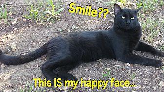 Adopt A Pet :: Artemis Blake  - Fischer, TX