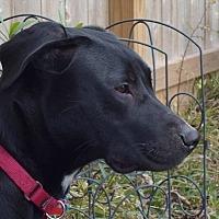 Adopt A Pet :: Carl - Jay, NY