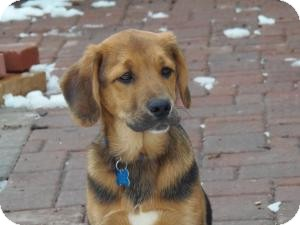 Minneapolis Mn German Shepherd Dog Meet Jenson A Pet For Adoption