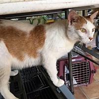 Adopt A Pet :: Mater - Capshaw, AL